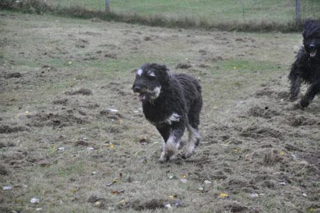 Junghundetreffen 2019 in Mechernich
