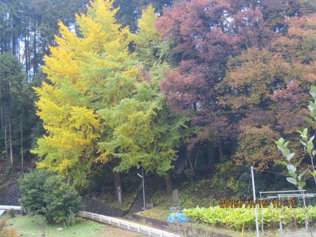 海沢神社付近