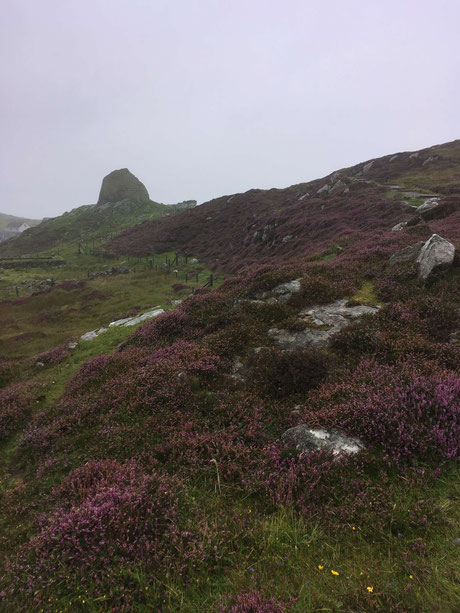 Heather in bloom at Carloway Broch
