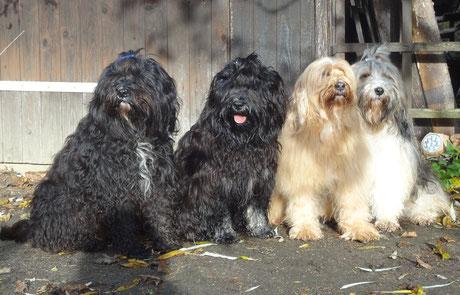 Kar-mi, Yeshi, Bya-ra und Milka