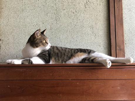友達猫の「いなちゃん」