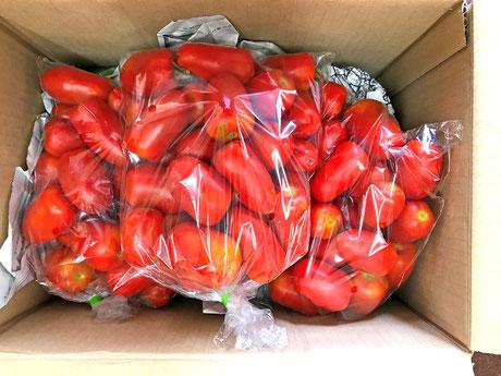 三宅サンマルツァーノ 産地直送 パッケージ 三宅トマト