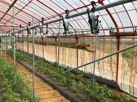 三宅サンマルツァーノ 菊地農園 栽培法