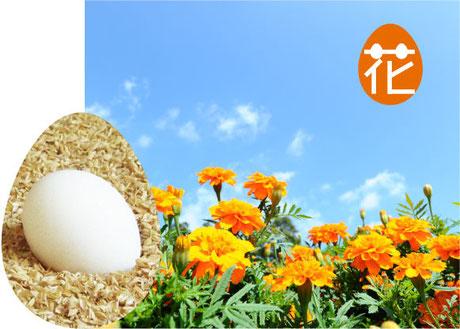 イメージ画像:花育ちの卵