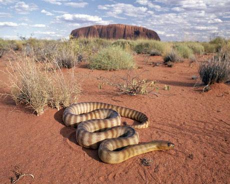 Serpiente del desierto