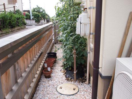 雨水浸透枡の近くの植栽は水やり不要