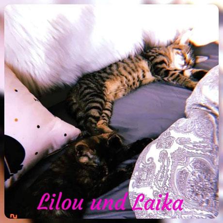 Lilou + Laika