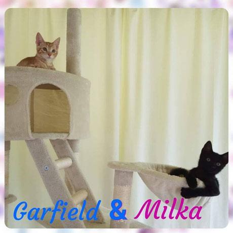 Garfield + Milka