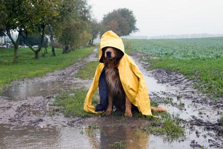 Hund, Matsch, Regen