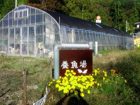蝶が描かれました。この写真が平成24年11月4日(日)の茨城版NHKクイズ番組に出ました。