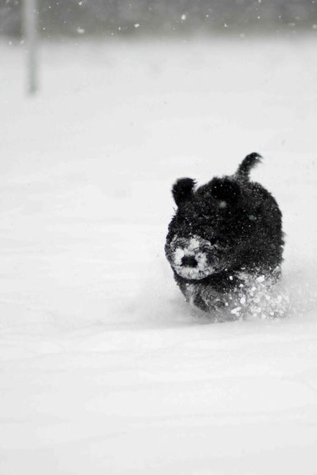 13. Woche: Vollgas im Schnee ...
