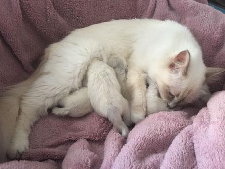 Liana et ses chatons