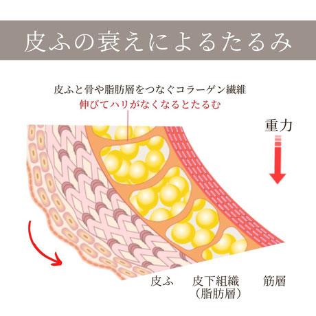 肌細胞・皮ふの衰えによるたるみ
