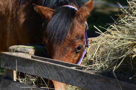 Pferdepension Tüfi Leistung Fütterung