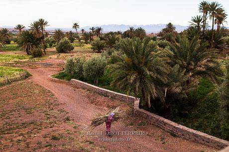 maroc, tazentoute, palmeraie, rachel jabot ferreiro, erjihef photo