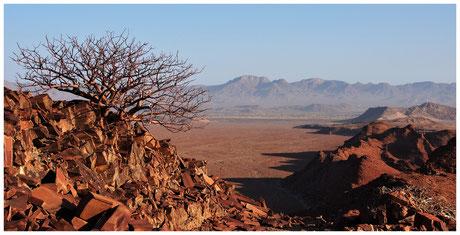 Commiphore de Namibie