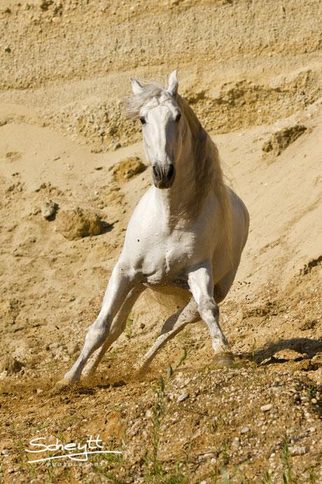 Außergewöhnliche Pferdefotografie in einer Kiesgrube