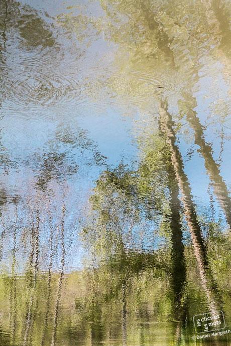 Série Reflets. Forêt #3. 13 avril 2014.