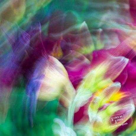 Série Couleurs. Les fleurs imaginées.