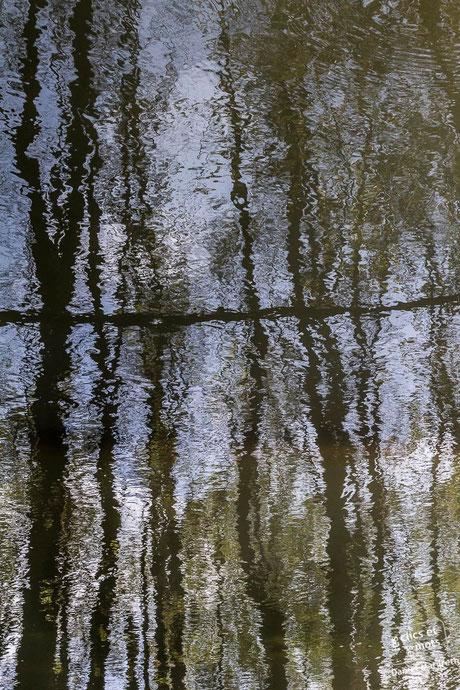 Série Reflets. Forêt #2. 13 avril 2014.