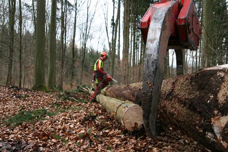 Brennholz Beschaffung im Wald