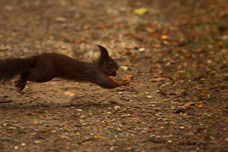 Tierfotografie Tiere Katze Hund Fotografin Animals