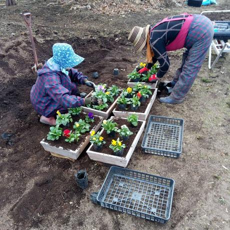 花の植え替え作業