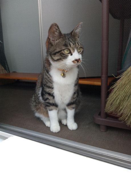 北海道胆振東部地震の仮設住宅に網戸の設置。と猫
