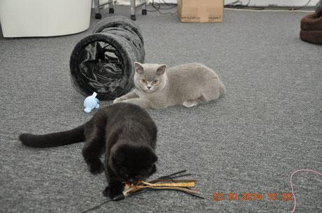 Ares und Amber