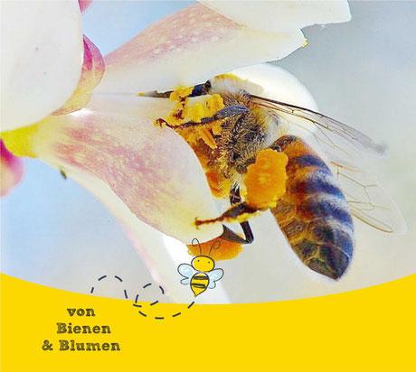 Blütenpollen - Rheine -  Bärenstark durch den Tag - Imkerei - Bienen  -  Von Bienen und Blumen - Bärbel Bröskamp -