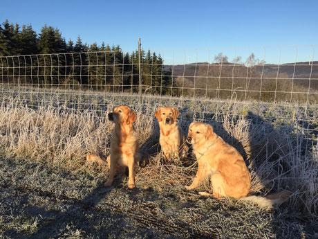 Dina , Fanni und Bella im Januar 2020