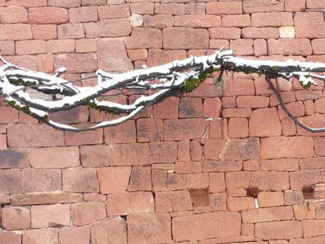 Collonges-la-Rouge, ancien pays de vin, avec ses treilles (vignes) qui courent sur les murs de grès rouge