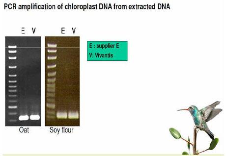 DNA Extraktion aus Lebensmitteln
