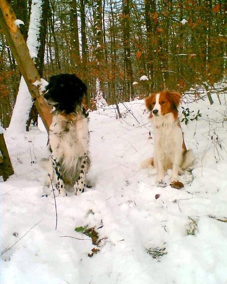Amadeus und Santos im Wald