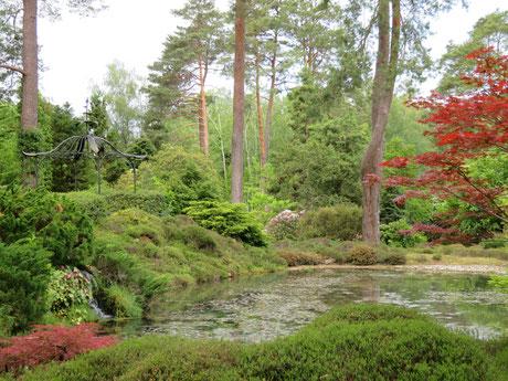 Ambiance asiatique à l'Arboretum des Grandes Bruyères