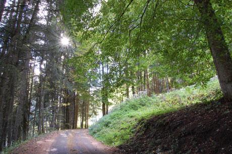 gite en Alsace au Bonhomme 68650 col des Bagenelles, deconnexion, relaxation, nature, écologie, méditation, éco-lieu