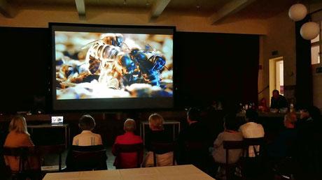 Nur wenige Leute nahmen sich die Zeit, um diesen beeindruckenden Film von Markus Imhoof anzuschauen, der 2012 in den Kinos zu sehen war.