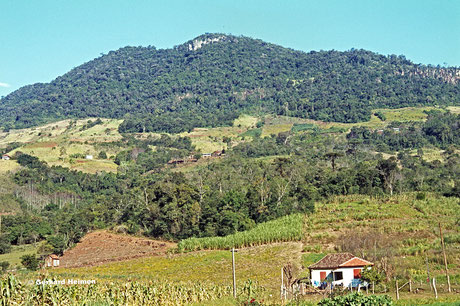 Habitat Parodia leninghausii, 1979