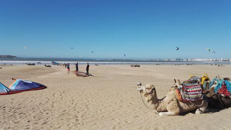 Kites & Kamele am Strand