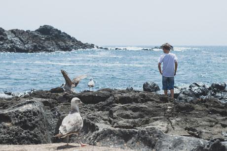 Gaviotas en el Cotillo (Fuerteventura)