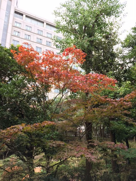 成田エクセルホテル東急の日本庭園