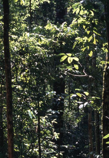 Tieflandregenwald in Costa Rica © N. Bertelsbeck
