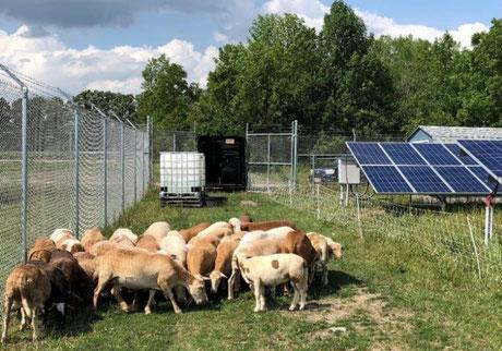 agrivoltaisme agrivoltaique élevage mouton rangevoltaic agrivoltaic