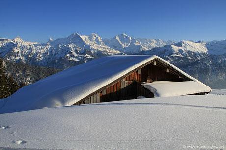 Panoramaweg Niederhorn Waldegg - 18.02.2013