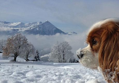 Beatenberg - Waldegg - Gassirunde im Schnee - 12.01.2013