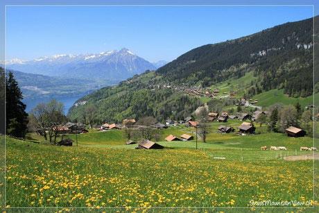 Beatenberg Waldegg - 24.05.2010