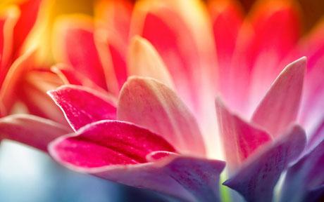 Frauengruppe, Blüte