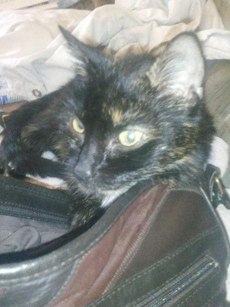Katze Lucy, Foto vom Halter