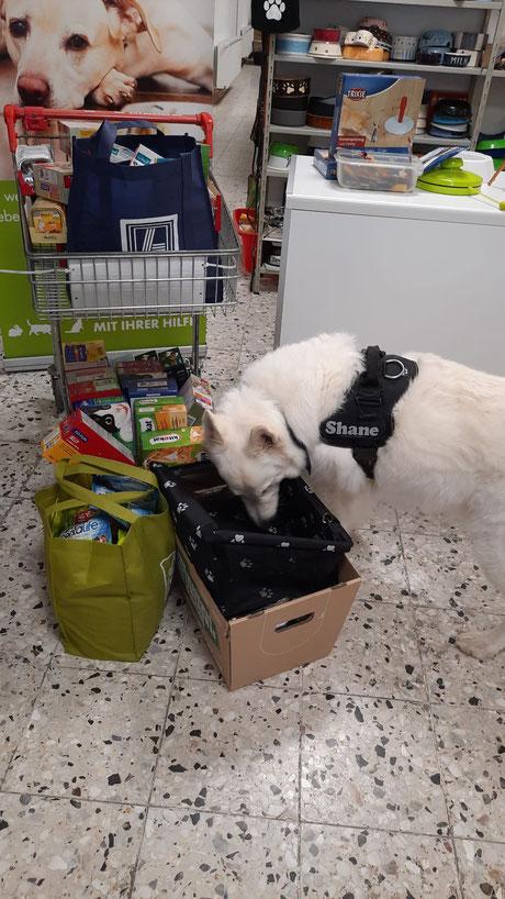 weißer Schäferhund mit Tierfutterspenden