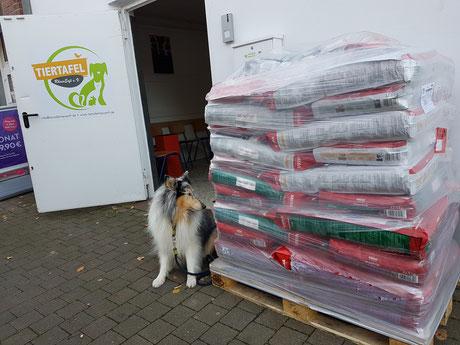 DogWalk-Spende von Mera-Petfood, Foto: Oetken